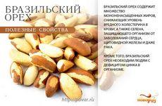 Бразильские орехи: состав, польза и свойства бразильских орехов
