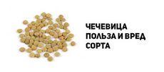 Чечевица: состав, польза и свойства, рецепты блюд из чечевицы