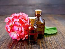 Эфирное масло герани: свойства и применение гераниевого масла
