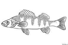 К чему снится рыба женщине – правда ли, что к беременности? основные толкования: к чему снится живая рыба женщине