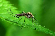 К чему снятся комары по толкованию популярных сонников. к чему снятся комары кусающие, жужжащие, вьющиеся роем