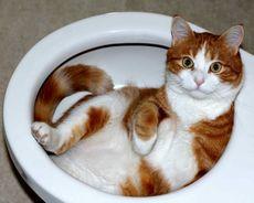 Как избавиться от запаха кошки в доме