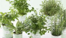 Какими комнатными растениями стоит украсить квартиру?