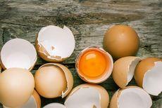 Куриные яйца, польза и вред куриных яиц