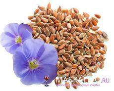 Льняное семя: польза и свойства, применение льняного семени