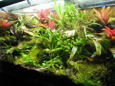Посуда для комнатных растений: горшки, чаны, плошки, сосуды, поддонники, контейнеры, кашпо, цветочницы