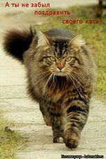Праздник 1 марта - день кошек в россии