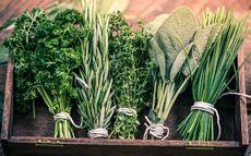 Сушка и хранение растений. сушка и хранение корней, коры, стеблей, листьев, почек и семян