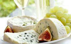 Сыр с плесенью (плесневый сыр), польза сыра с плесенью, может ли быть сыр с плесенью вреден?