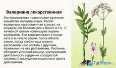 Валериана лекарственная. описание и свойства валерианы