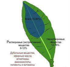 Зеленый чай, состав, польза и вред зеленого чая