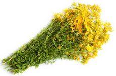 Зверобой продырявленный. свойства травы зверобоя